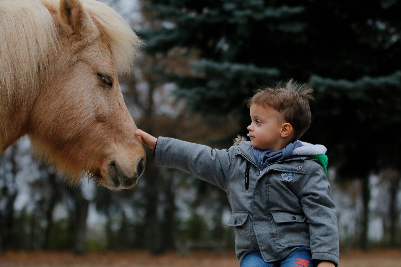 Az izlandi ló barát egy életre.