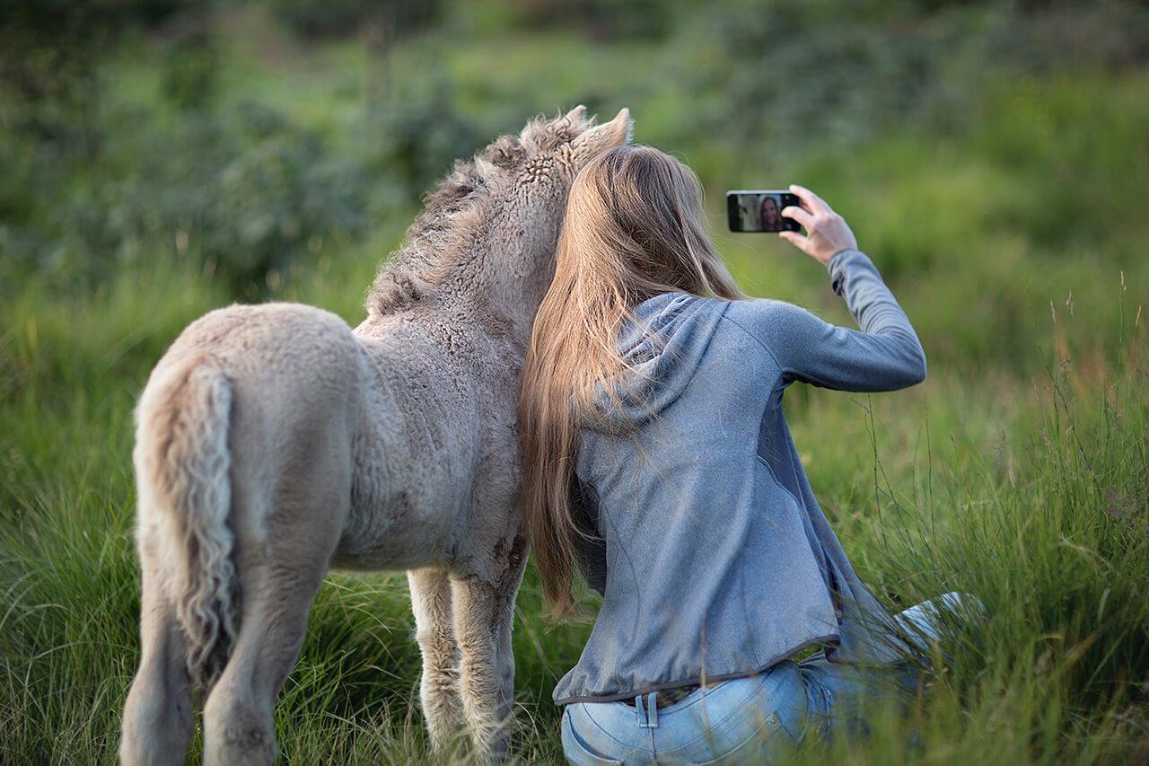 Az izlandi ló imádnivaló karakter